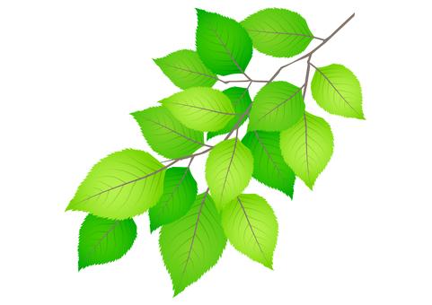Fresh green material 260