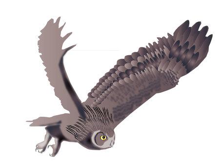 Flying 梟 01