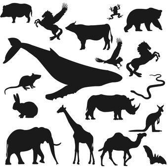 동물 시루엣쯔