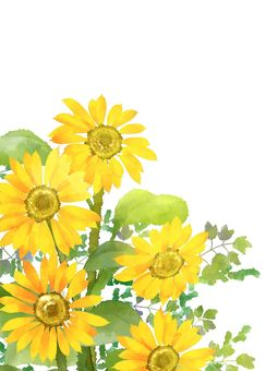 Sunflower background material 03