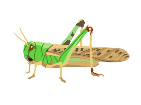 Animal _ Insect _ Tonosama Batter _ No line