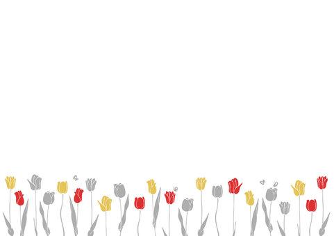 Tulip D