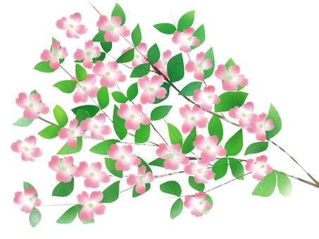 Flower Mizuki peach color