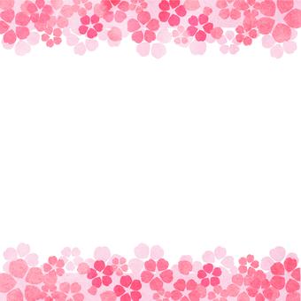 Cherry blossom, cherry tree, watercolor