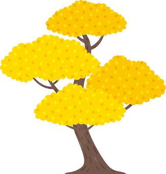 나무 단풍