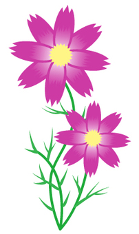 Flower material _ Cosmos 01