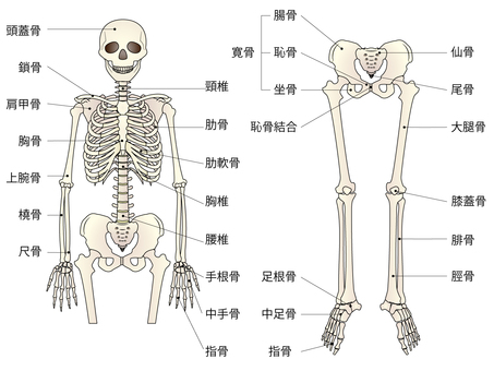 Bone, whole body skeleton, name included