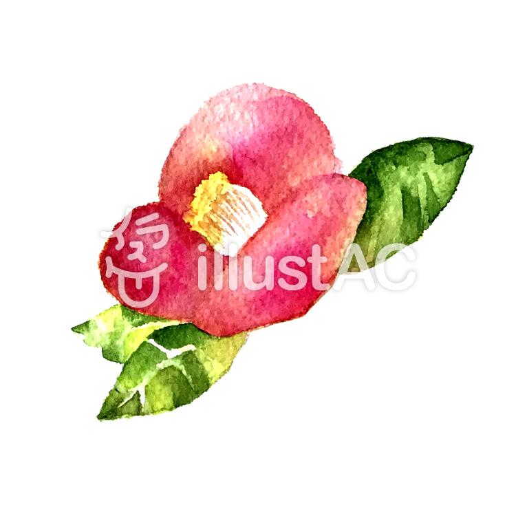 椿の花イラスト No 913469無料イラストならイラストac