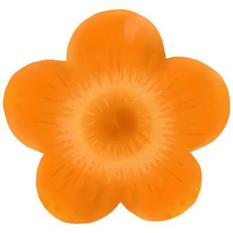 Carrot (flower)