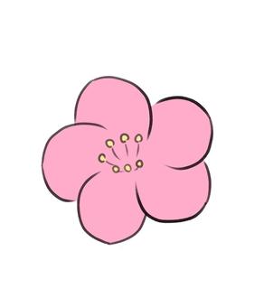 梅花粉紅色