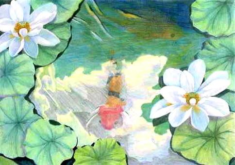 Pond in lotus pond