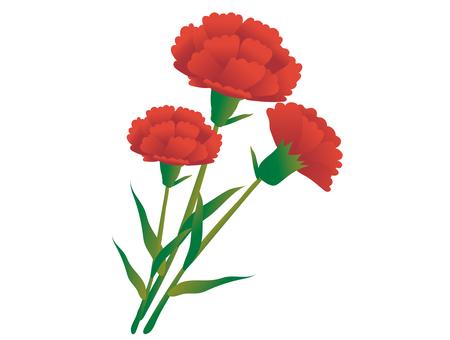 Carnation material