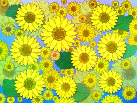 Sunflower wallpaper blur