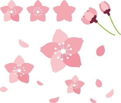 Cherry blossom illustration