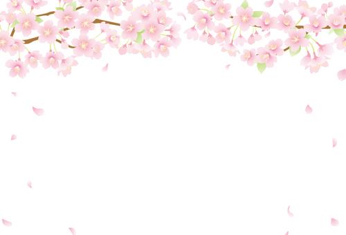 벚꽃 배경 05