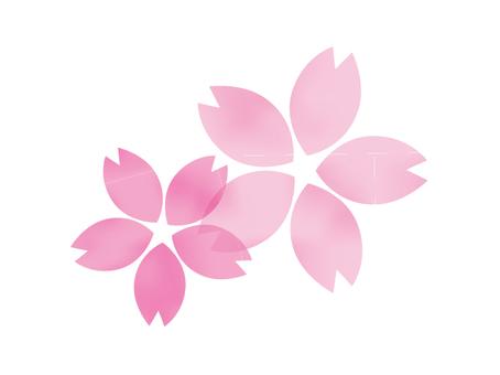 큰 벚꽃 3