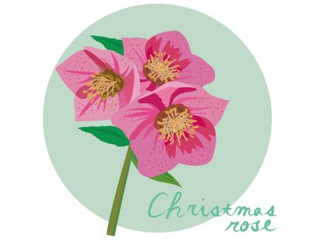 ピンクのクリスマスローズ
