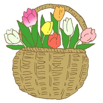 Tulip in the basket