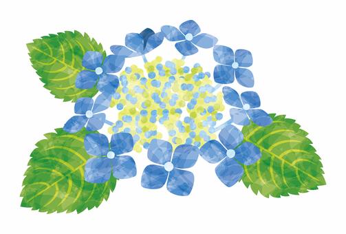 紫陽花/ガクアジサイ