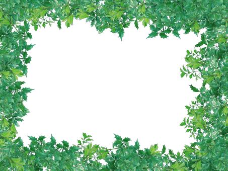 Hiiragi's frame (leaves)