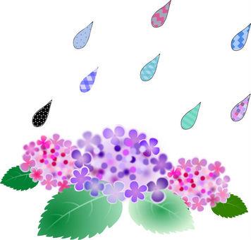 Hydrangea and rain.