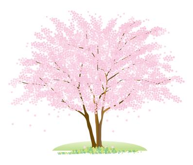1 그루의 벚꽃 나무