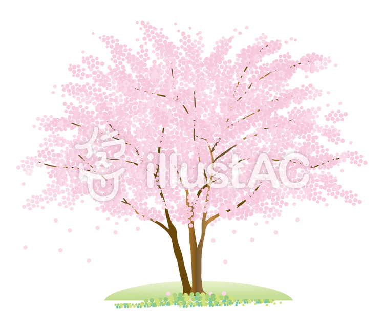 1本の桜の木イラスト No 140000無料イラストならイラストac