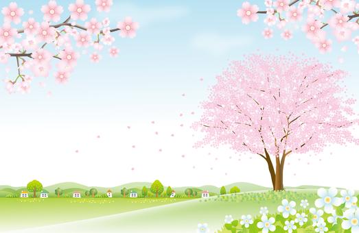 언덕에 벚꽃 나무에서 (2)