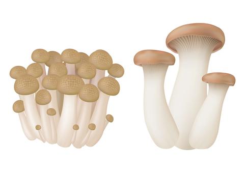 Mushrooms _ Autumn vegetables