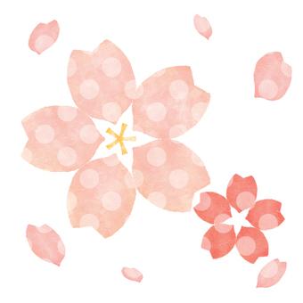 Sakura 20