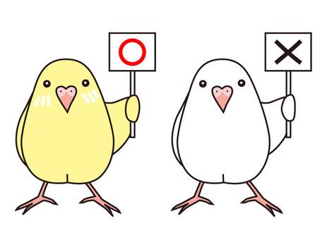 ○ × parakeet