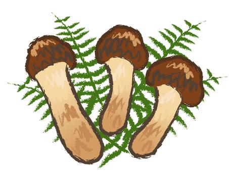 Japanese style autumn mushroom Mushrooms Matsutake Matsutake