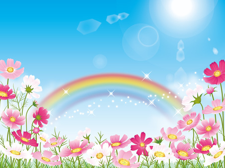 Blue sky background with cosmos field and rainbow