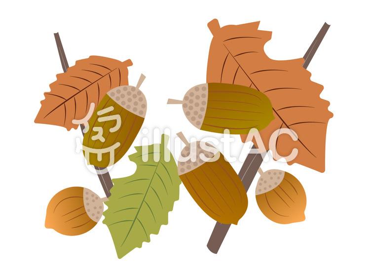 どんぐりと落ち葉のイラスト