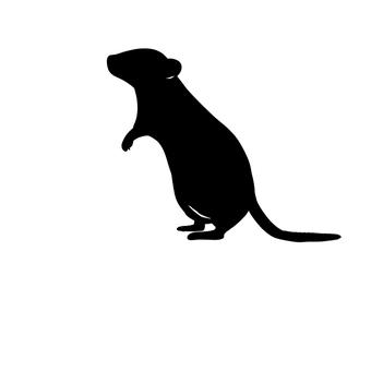Mouse black