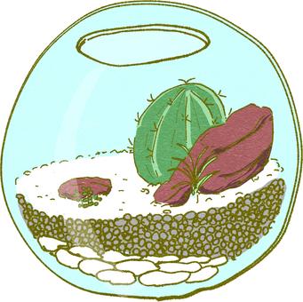 Terrarium with cactus
