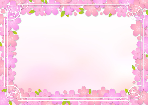 Cherry blossoms 313
