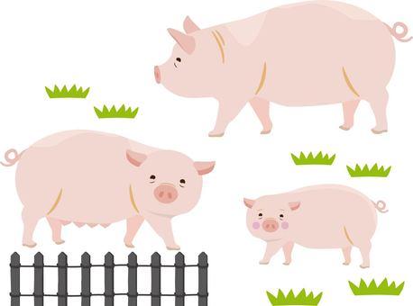 돼지 부자