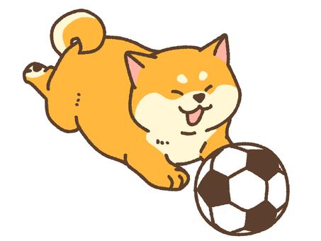 Soccer shiba