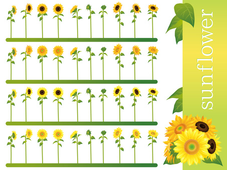 Summer sunflower variety flower material set