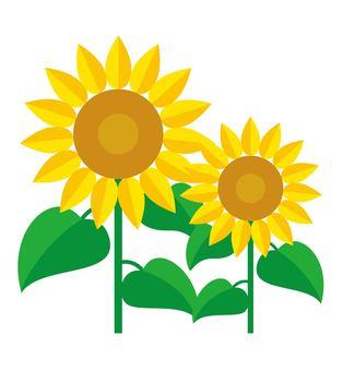 Sunflower two wheels