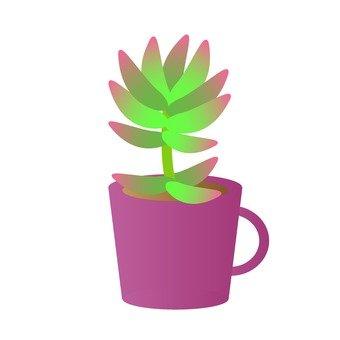 Houseplant - Sedum (red)