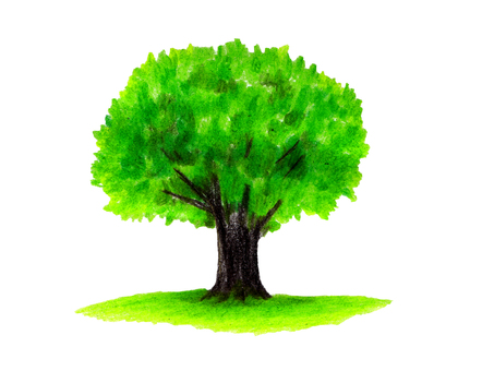 느티 나무