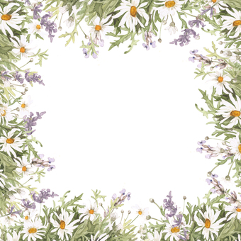 Margaret and lavender flower frame