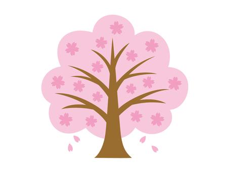 Full bloom Zakura 2