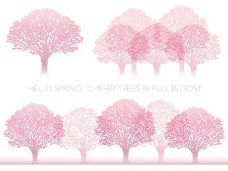 만개 한 벚꽃 나무 세트