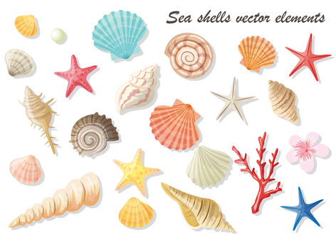 Seashell illustration material Summary