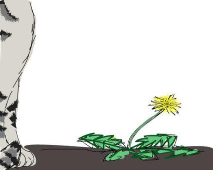 Cat and dandelion