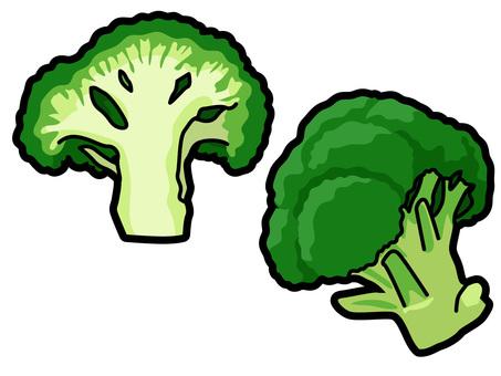 Ingredients _ vegetables _ broccoli _ lines