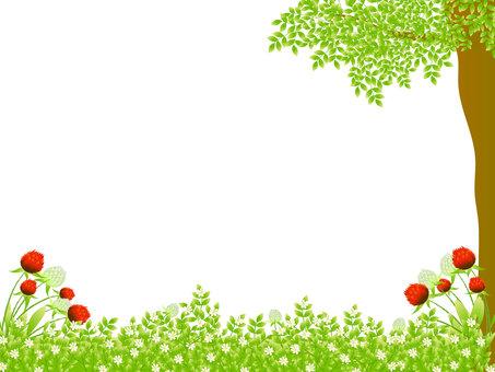 Grass flower 畑